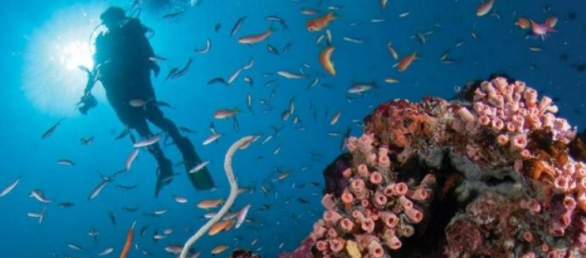 Scuba Diving For A Healthy Mind And Body