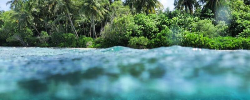 20 Photos That Prove Vaavu Atoll Is A Scuba Diver's Dream